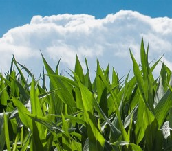 Consejo de la Producción Agraria Ecológica de Navarra