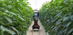 Agricultura 4.0 Inteligente